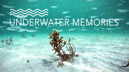 Underwater Memories, video file download